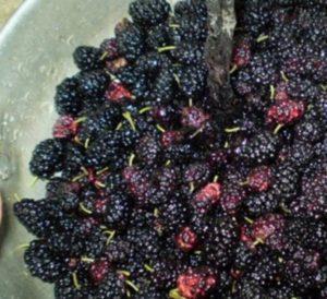 Варенье из шелковицы - рецепт с пошаговым фото
