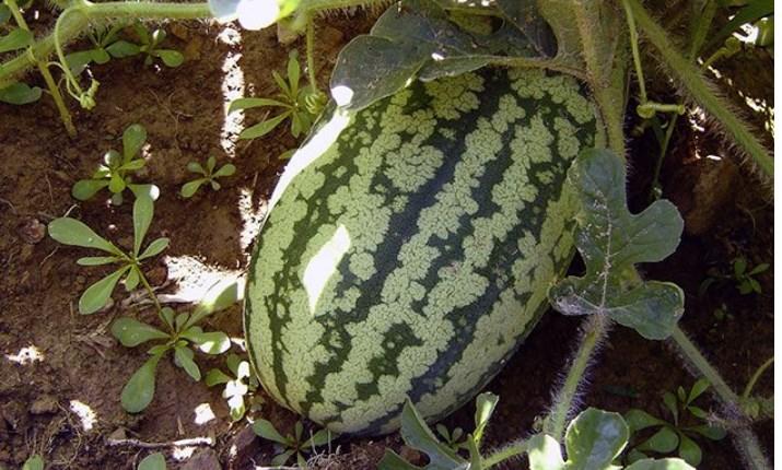 Посадка овощей в апреле 2018 по лунному календарю в открытый грунт