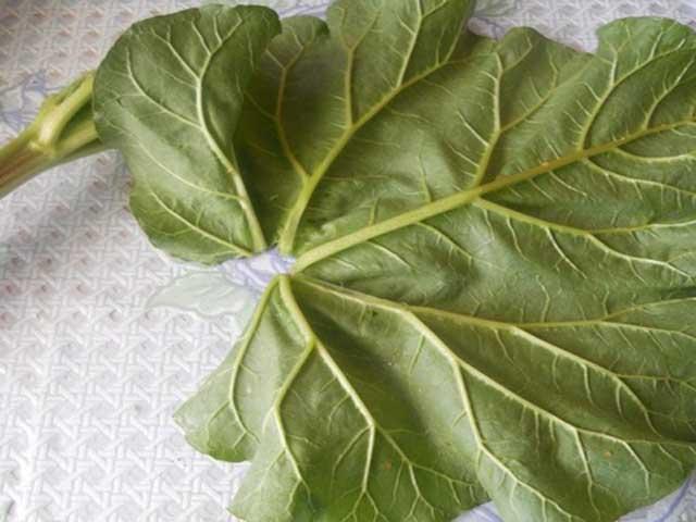 Блюда из ревеня – простые и вкусные рецепты с фото