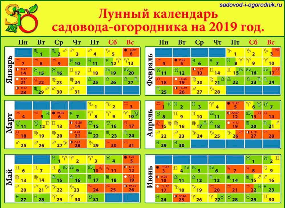 Когда сажать огурцы на рассаду в 2019 году по лунному календарю