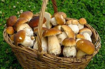 Как варить грибы - свежие и замороженные, лисички, маслята, шампиньоны