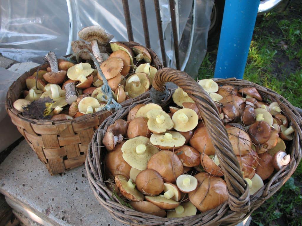 Сколько варить грибы для маринования?