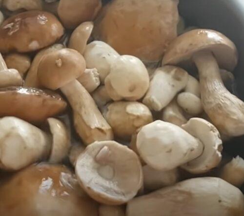 Подготовка грибов